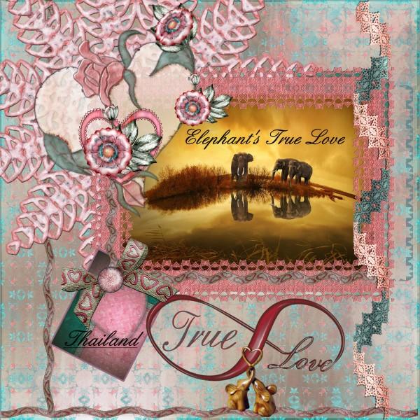 Feb.2016 – lo 6 – Elephant's True Love