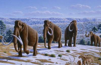 5 Tahun Lagi, Mammoth Akan Hidup di Bumi