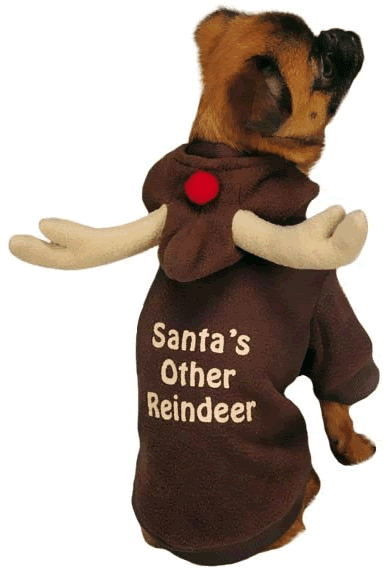 casual canine reindeer