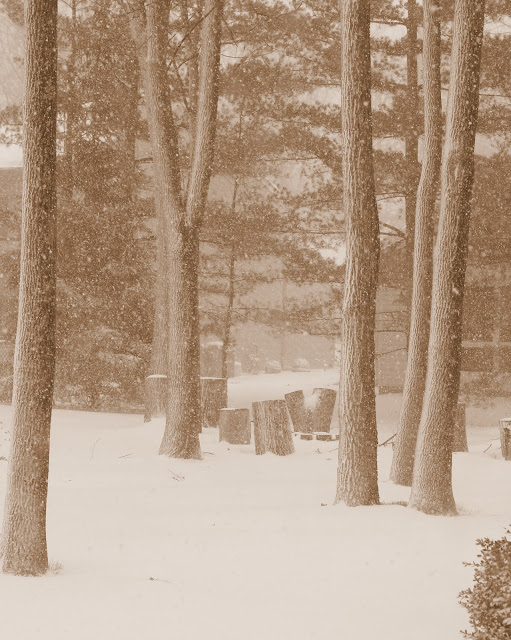Winter Wonderland - Sepia Photo - Free Download