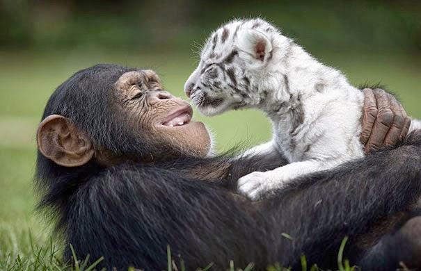 Extrañas parejas de animales