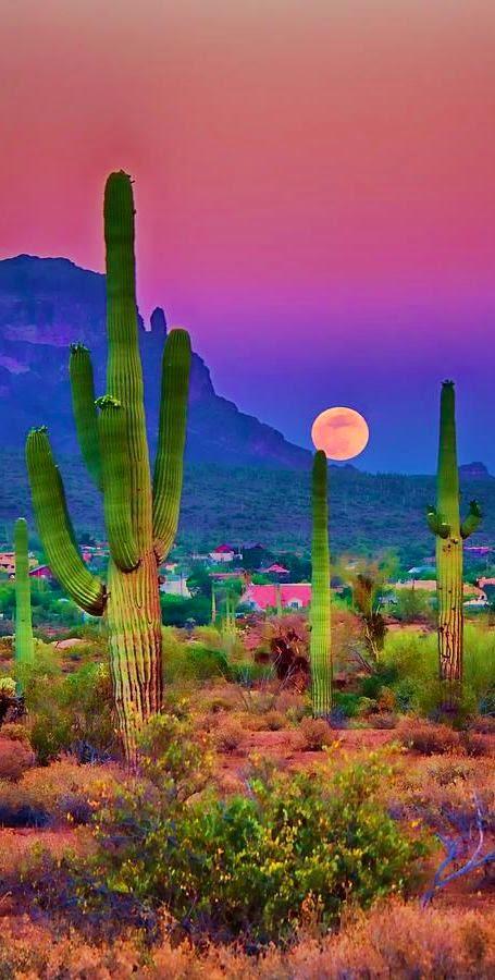 Sunset in the beautiful Sonoran Desert near Chandler, Arizona • photo Saija Lehtonen