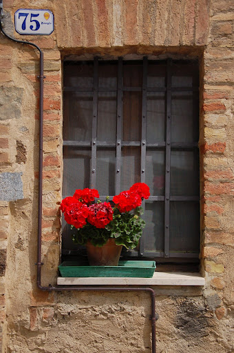 Geraniums on a window sill in Montalcino