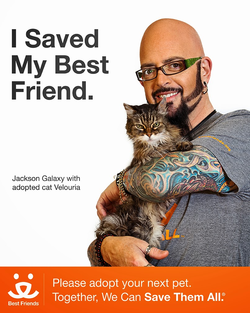 Melissa 39 s mochas mysteries and meows jackson galaxy for Jackson cat whisperer