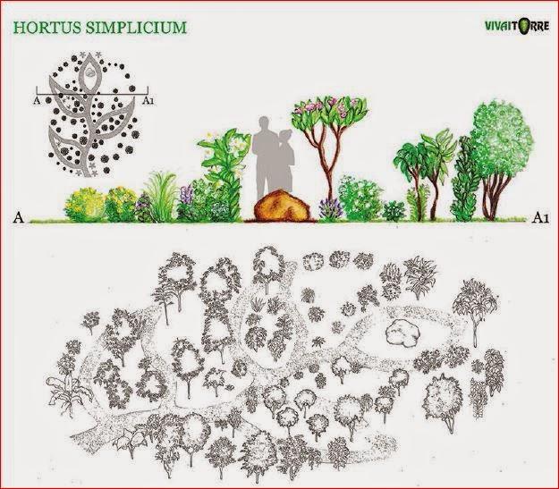 Hortus simplicium ad orticolario - Progetto giardino mediterraneo ...