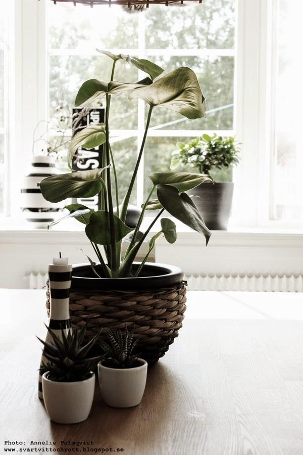 grön växt, gröna växter, loppis, korg, korgar, kruka, krukor, sprayfärg, svart, svarta och vita, svartvitt, kähler vas, kähler ljusstake, kaktus, kaktusar, vitt, vita, svarta, svart och vitt,