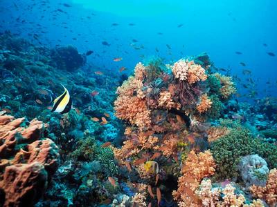 Pemandangan indah bawah laut banda