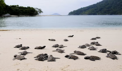 Anambas, Kepulauan Tropis Terindah Se-Asia