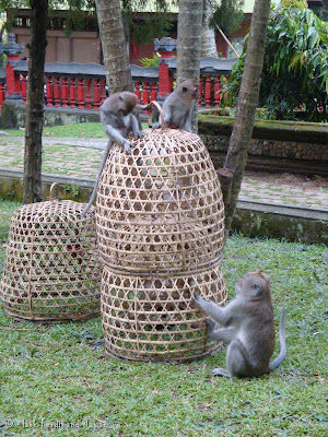 Ubud Monkey Forest Bali Photo 6