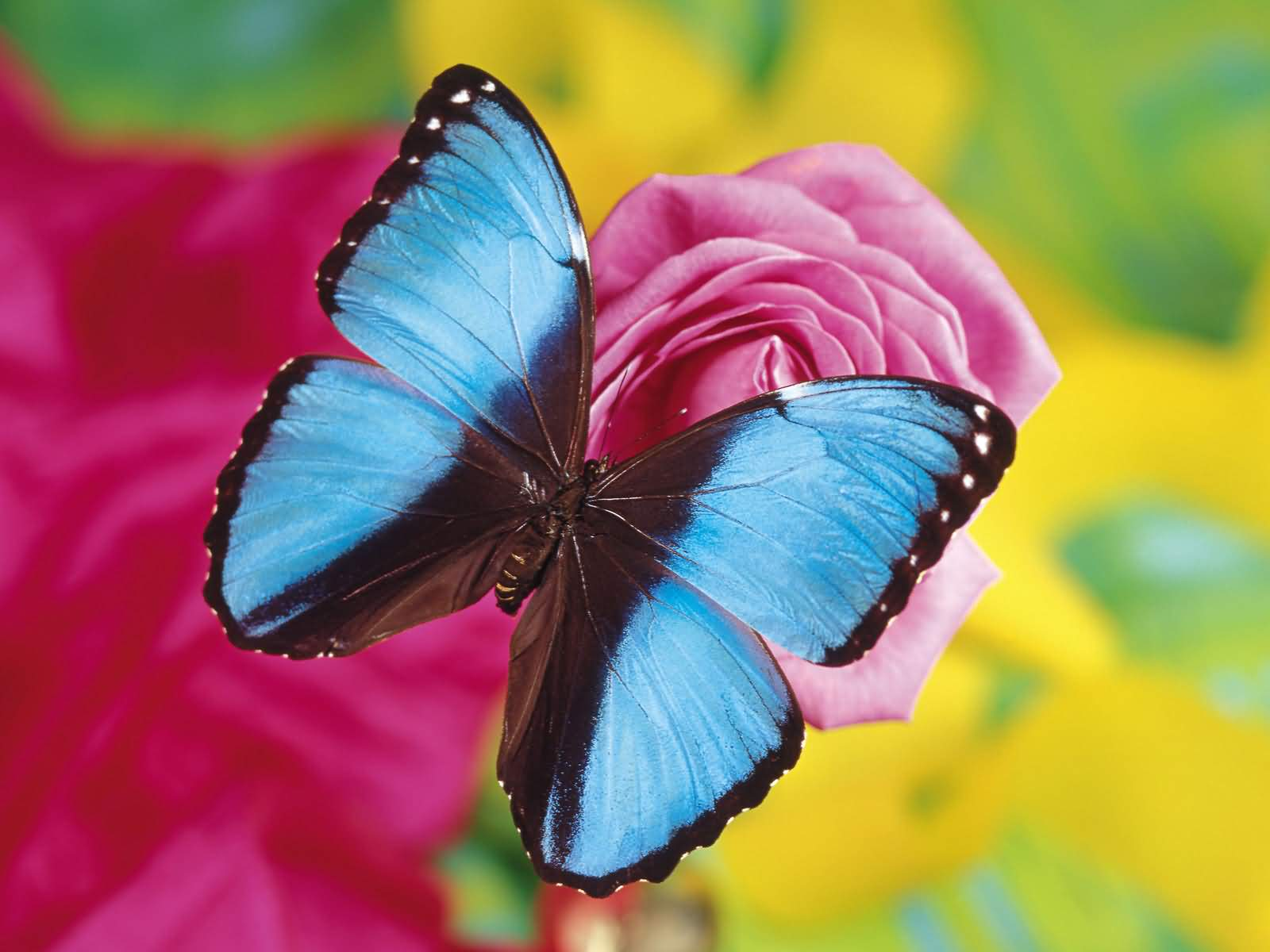 ALL PICTURES Beautiful Butterflies on Flowers