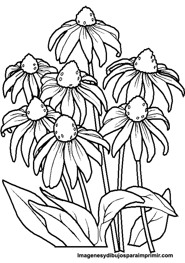 Coloring picture daisies