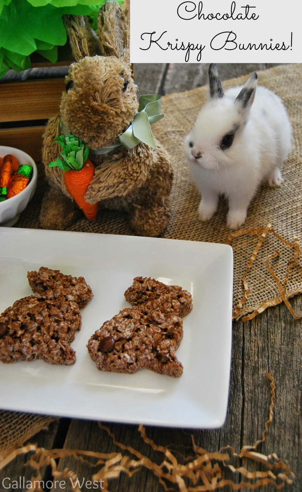 chocolate krispy bunnies tatertots and jello