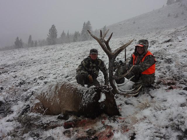 Q Creek Elk Hunting A couple of nice bulls being