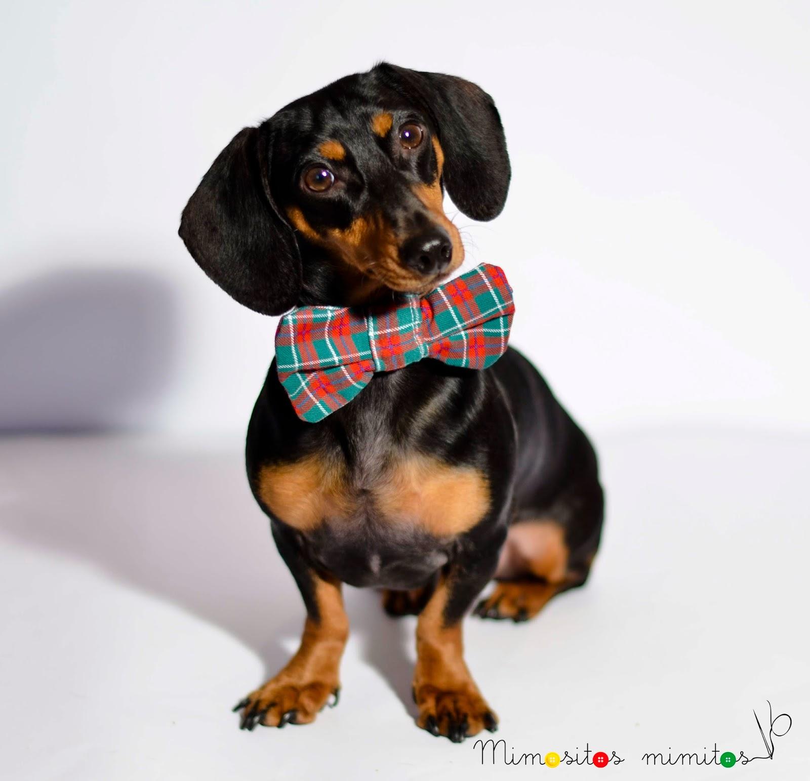 Coleccion  Hunter ropa perro teckel Dachshund hecho a mano handmade dog Sr. Perro Pepito&CO