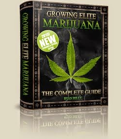 The Complete Guide to Growing Your Own MMJ
