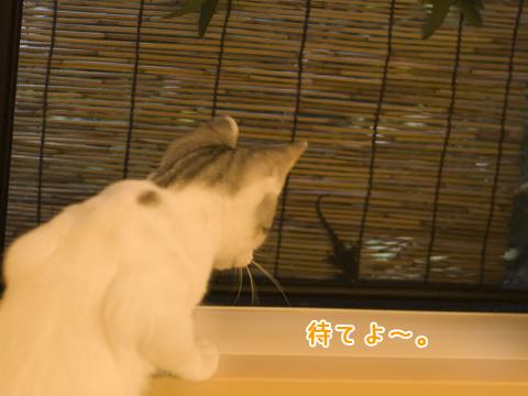 ヤモリを見つけた子猫