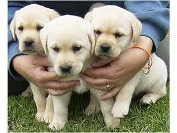 Cuccioli in Regalo: Dove Trovarli ~ Pet Shop Cani e Gatti