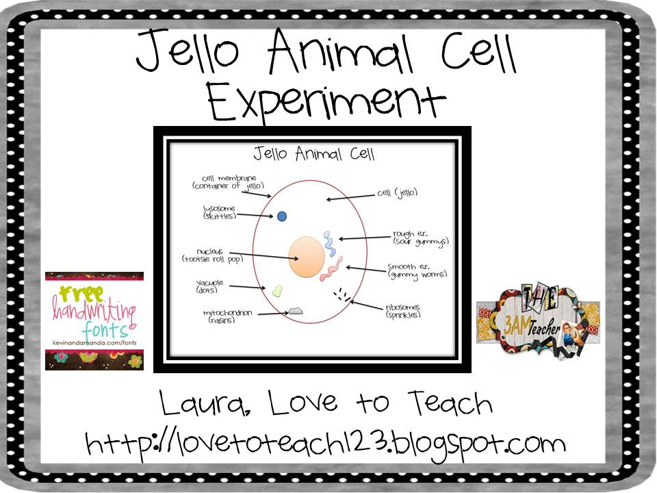 Animal Cells Projects For Middle Schools Jello Animal Cell Project