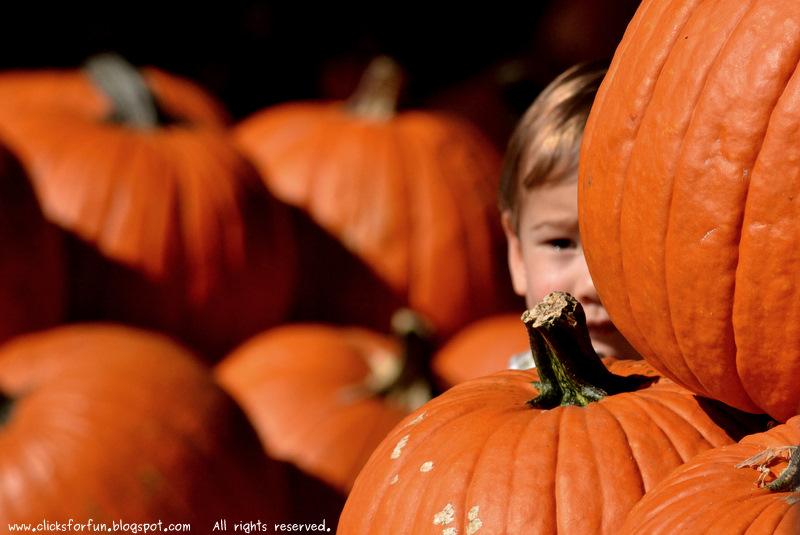 halloween children pumpkins photography photos blogger