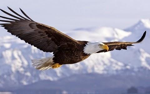 principles, eagle, bird