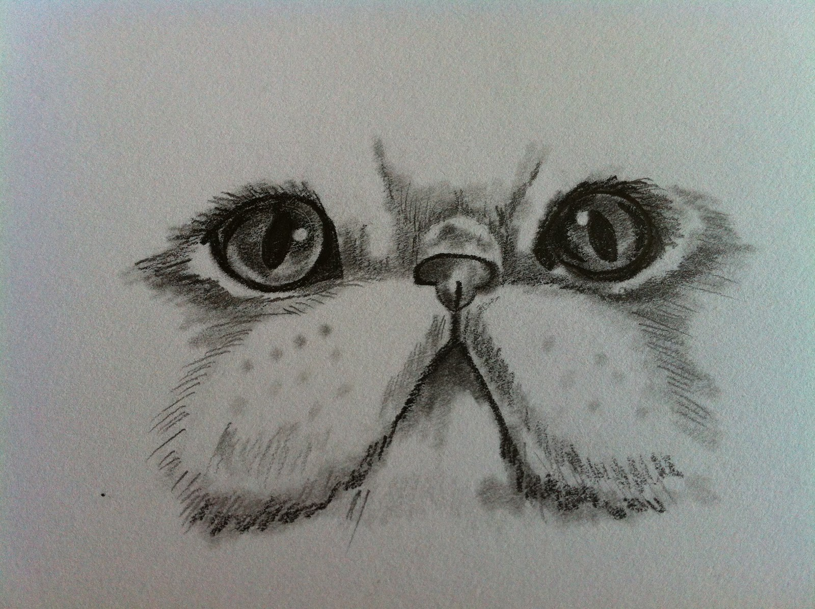 Persian Cat Face Drawing picture wallpaper