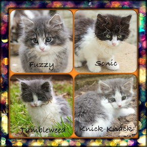 Kittens Need Foster Homes