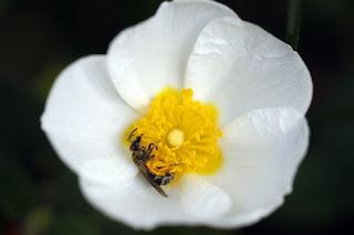 La UE se lanza a proteger la salud de las abejas