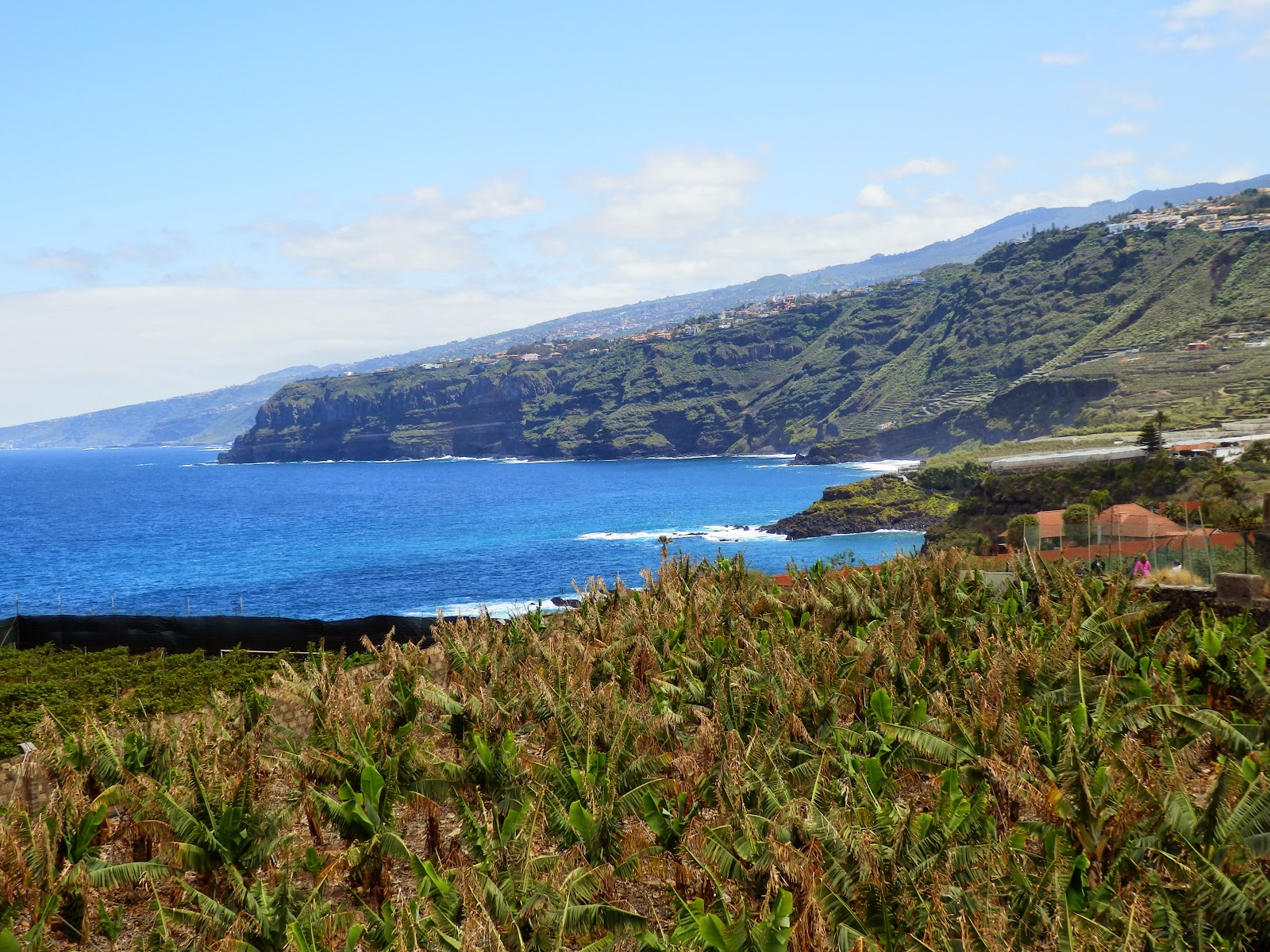 Teneriffe Coast and banana plantations
