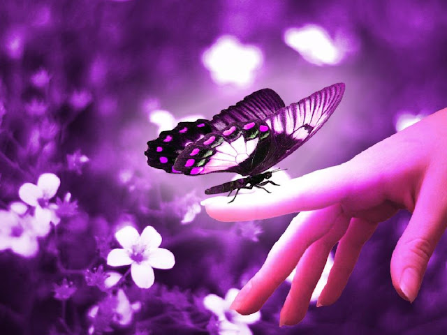 Purple Pretty Butterfly Flowers Wallpaper