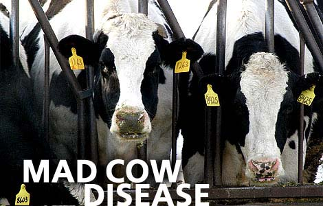 mad cow disase usa Organic Beef Not Contains Mad Cow Disease