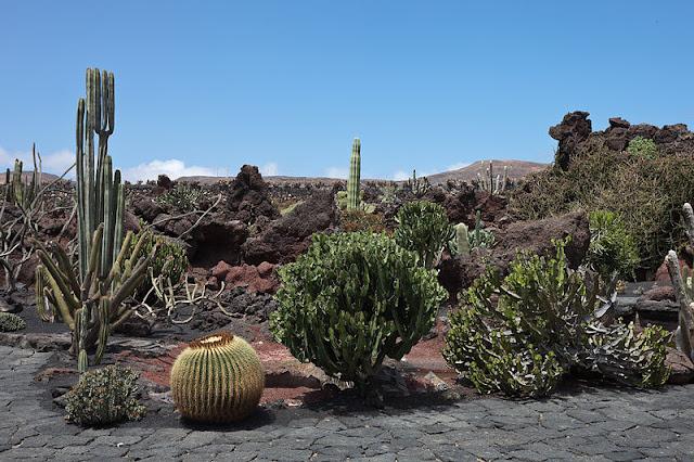 Fotografije kaktusa - Page 11 800px-Guatiza_-_Jardi%CC%81n_de_Cactus_-_Lanzarote_-_J30