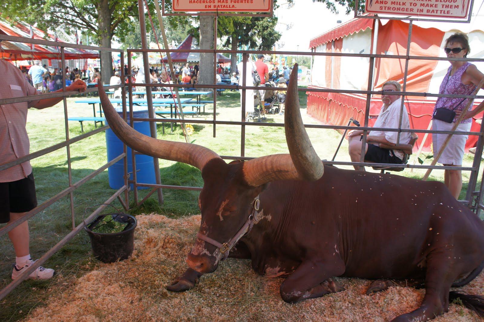 verdens største tyr