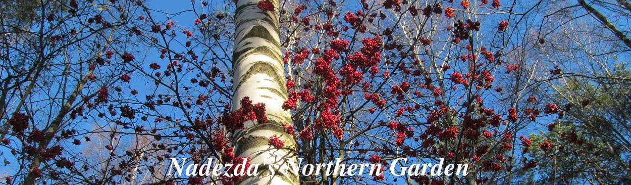 Nadezda's Northern Garden