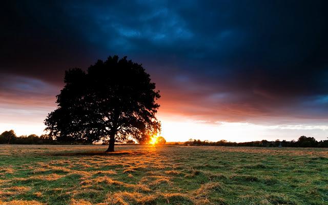 Ray of Sunlights