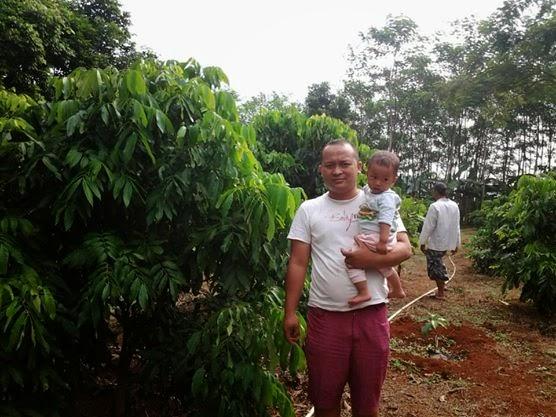 kebun Kelengkeng new kristal di kabupaten batang