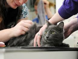 Kucing Yang Sedang di Vaksinasi