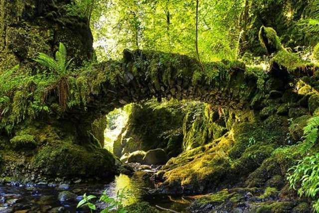 """Fairy bridges"" like this are found in numerous places in Scotland. Like the tree root bridges of India, they are centuries old. Many of these bridges have legends surrounding them with regards to the mythical beings that live around them, or the other worlds that they can acces"