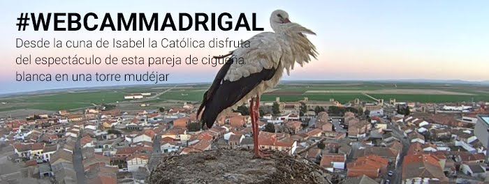 Sigue a la cigüeñas de Madrigal