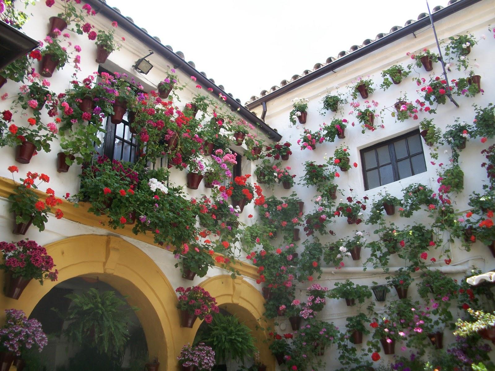 Pollici rosa di rare piante giugno 2013 - Terrazzi arredati e fioriti ...