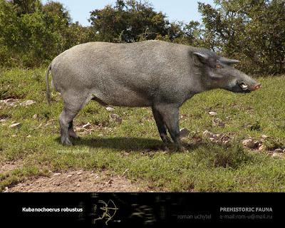 suidae extinta Kubanochoerus