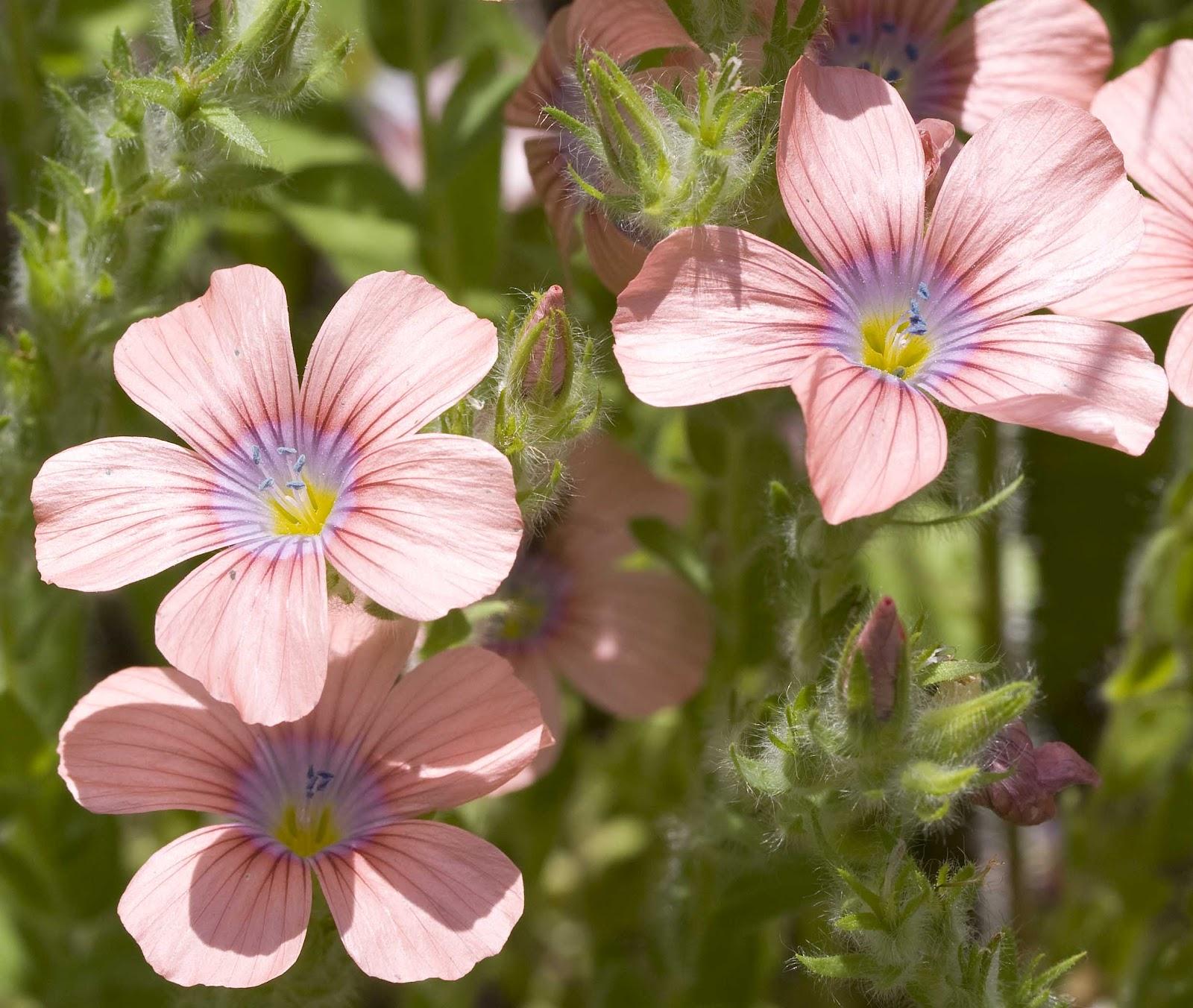 http://4.bp.blogspot.com/-1M9PsLIhgzU/UBNvm7pySQI/AAAAAAAAAmQ/DA-aO4jqE8U/s1600/wildflowers1.jpg