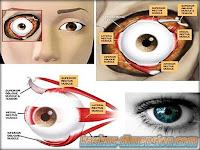 Fakta Mengenai Mata