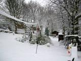 Wintry garden