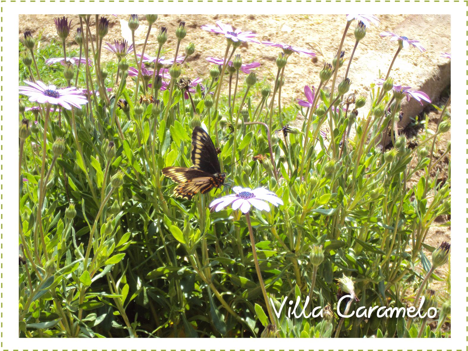 Villa caramelo mi jard n de primavera for Jardines de primavera