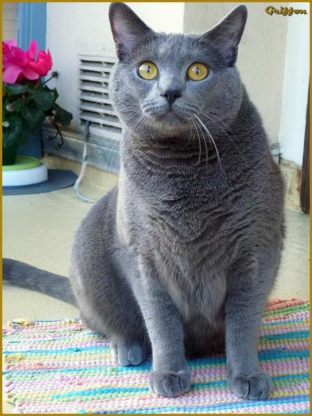 sensibilisation sur les chats informations sensibilisations conseils le prix d 39 un chaton. Black Bedroom Furniture Sets. Home Design Ideas