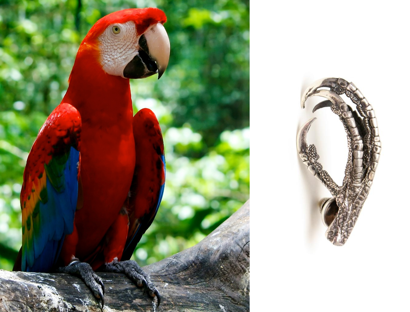 Ann Demeulemeester bird foot brooch with parrot