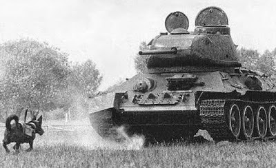 Perros contra tanques, Segunda Guerra Mundial