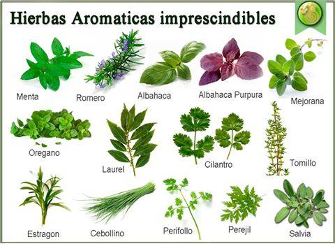 Pajarito en grama huerto diy - Huerto de plantas aromaticas ...