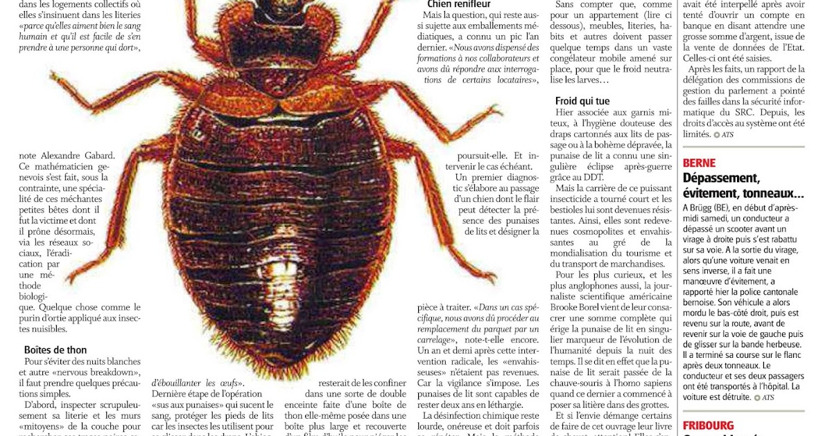 Bed Bugs Are Back An Ipm Answer