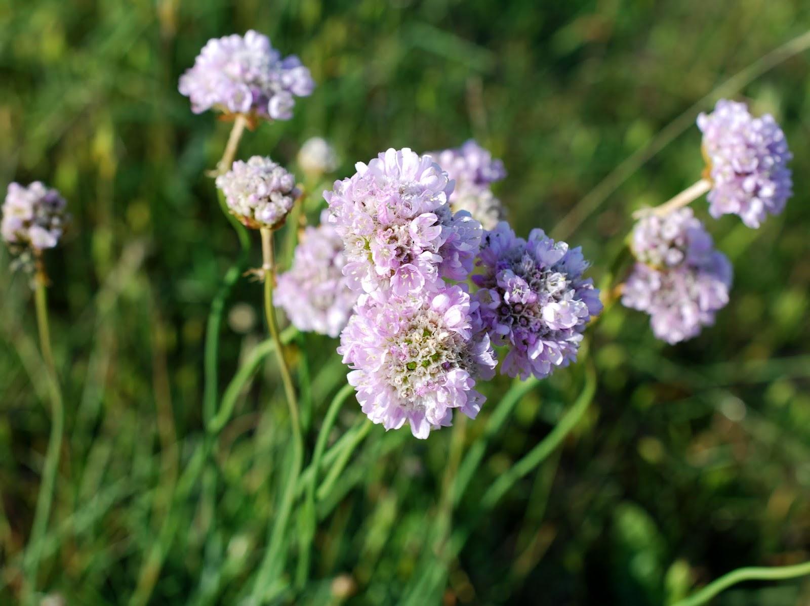 Random Pictures Sommerliebe: Wiesenblumen